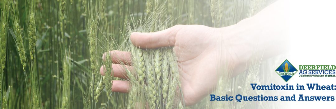 DON (Vomitoxin) in Wheat: Basic Questions and Answers